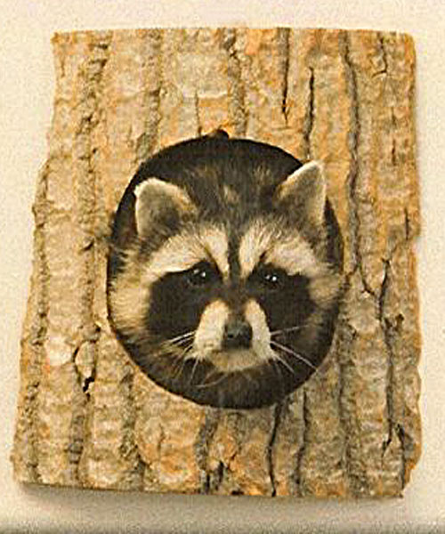 Raccoon Peeping