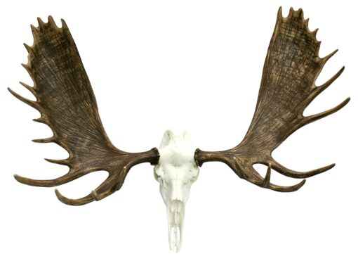 Faux Alaskan Moose Mount